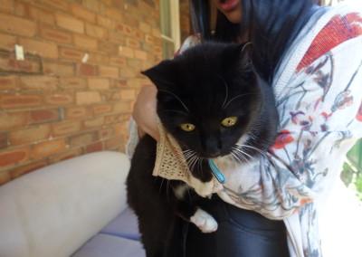 Tuna the Cat